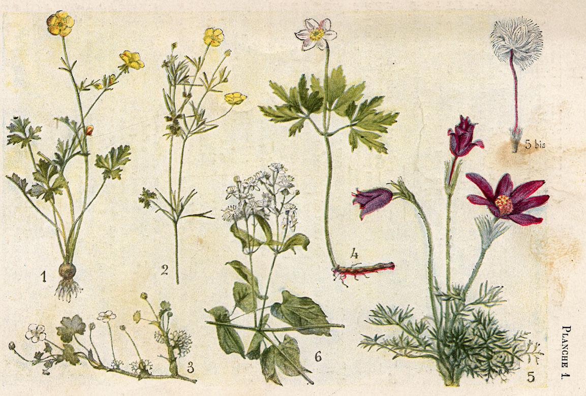 Gaston bonnier plantes utiles et nuisibles - Noms de plantes aquatiques ...